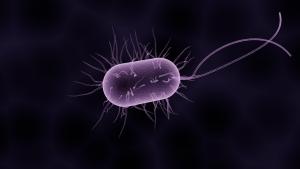 Eine Bakterie